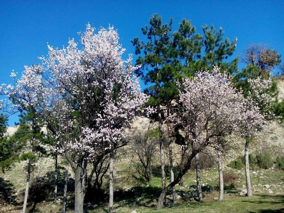 Пролетни импресии от долината на Влахинска река