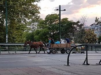За конете, каруците и безсилието на институциите в Благоевград