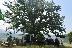 Жители и гости Ракитпочетоха Илинден край магнетичен дъб