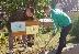 Ученици в Долно Осеново почистиха и направиха по-зелен двора училището