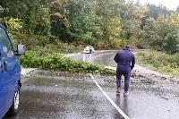 Ученически автобус се размина на косъм с удар в паднало дърво на Подгорския път