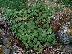 В Банско пръскат зелените площи срещу кърлежи