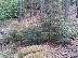 Национален парк Пиринтърси наемател атракцион